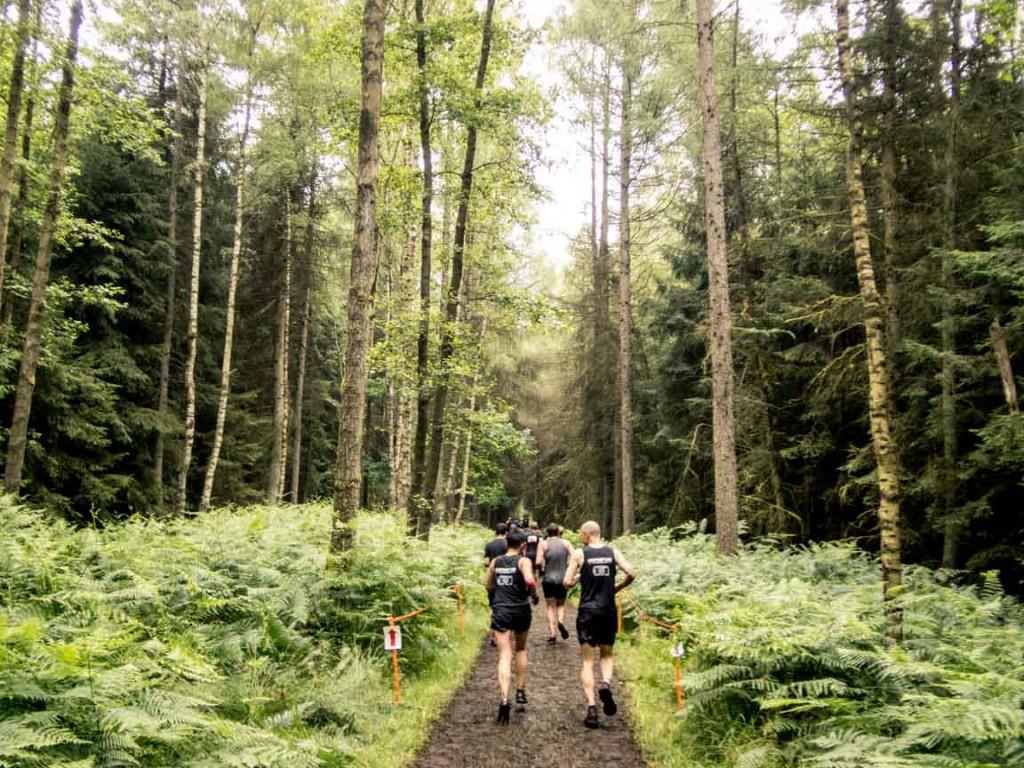 Waldstrecke mit hohen Bäumen und viel Farne